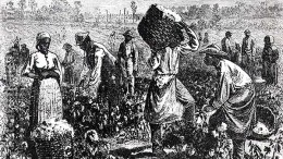 Slaves-Picking-Cotton-On-A-Plantation